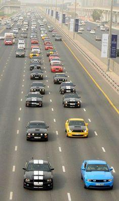 I'd be in Mustang heaven!!!!!!!