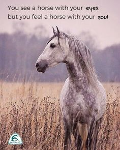 You see a horse with your eyes, but you feel a horse with your soul.