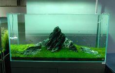 Iwagumi style aquascape at Nature Aquarium Galleryfb.com/nature.aquarium.setup