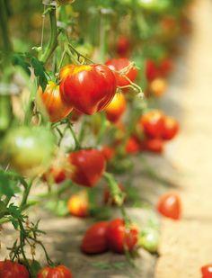 AXEO Services Blain s'occupe de la beauté et de la santé de vos espaces verts et jardins ! http://bit.ly/1ZLORQl