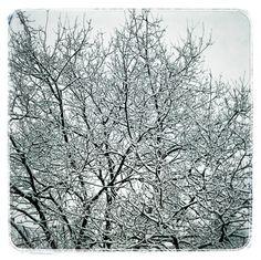 baum │ winter │ foto: nathalie nehues