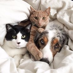 Hope you all are having a lovely and relaxing Sunday! These 3 besties are having some private snuggle time.via @ink361 Instagram photos | Websta