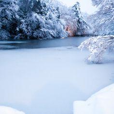 tōkyō-to, 日本で撮られた写真 石神井公園 雪景色