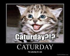 caturday - Google Search