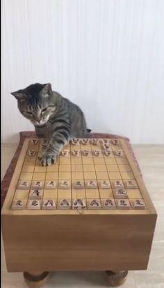 将棋で最多連勝記録を達成した藤井聡太四段が注目を集める中、Twitterでは将棋をする - Yahoo!ニュース(ねとらぼ)