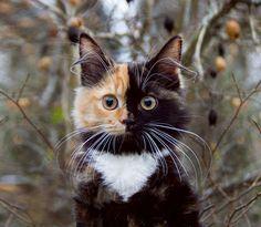 Ein Mann macht eine wunderbare Fotoserie von seiner besonderen zweifarbigen Katze! Das ist wirklich fantastisch anzusehen! - DIY Bastelideen