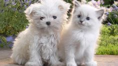 Type Cute Brown Cat And White Puppy Picture Pet Dog Photos Kitten Ki