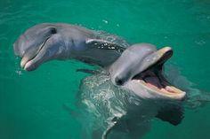 dolfijnen: tijdens dolfijnen show in lovina