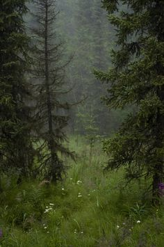 """""""The forest and I was all there was.  In the deep still silence I could feel the Earth's beating heart.""""  Author unknown"""