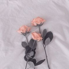 Imagem de flowers, aesthetic, and rose - peach nail Aesthetic Roses, Peach Aesthetic, Aesthetic Images, Aesthetic Photo, Aesthetic Wallpapers, Photo Wall Collage, Flower Wallpaper, Glitter Wallpaper, Pretty Flowers