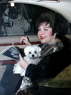 Elizabeth Taylor and her Maltese Daisy