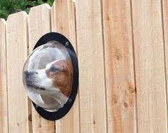 Fence with Pet Peephole