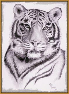 Imagenes para Dibujar de Tigres: Encuentra en este contenido algunas imagenes de tigres para dibujar faciles, que te inspirarán con su belleza.