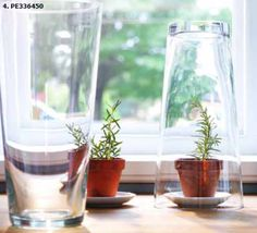 Vase turns into individual sized greenhouse! 20 Clever Spring Gardening Tips from IKEA using things you may already have that can take on a new purpose