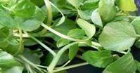 ΑΠΙΣΤΕΥΤΑ ΤΑ ΟΦΕΛΗ ΤΟΥ! Είναι το πιο υγιεινό λαχανικό στον κόσμο κι όμως…κανείς δεν το γνωρίζει! Natural Remedy For Hemorrhoids, Natural Cold Remedies, Herbal Remedies, Health Tonic, Eating Organic, Herbalism, Health Fitness, Herbs, Diet
