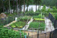 Le jardin au cœur de la forêt.