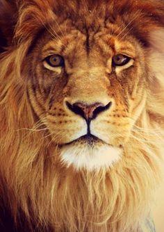 El León cree que todos son de su condición.