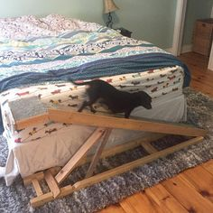 """""""On and off the bed whenever I want!! Thankfully my Dad is handy enough to make me these ramps!"""" ~ Crusoe #dachshund"""
