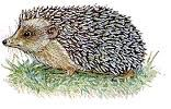 Hedgie's Alphabet: Listen to the name of the picture and find the word that  matches. This is a click and drag activity.
