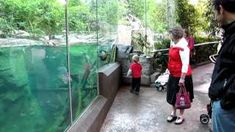 Playing with an Otter-1, via YouTube.