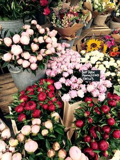 My Flower, Fresh Flowers, Beautiful Flowers, Spring Aesthetic, Flower Aesthetic, Fond Design, Fotografie Hacks, Flower Market, Flower Shops