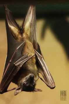 bats can be cute too, ya'll