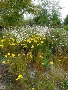 Tuinen van Devon | MijnAlbum - Fotoalbum Gratis Online! Wild Site Nursery Mieke Löbker