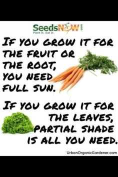 "Garden tips...""if you grow it for the fruit or the root, you will need full sun. If you grow it for the leaves, partial shade is all you need!"""