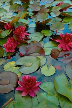 Pond plants for a healthy pond ecosystem. My Flower, Flower Art, Flower Power, Lotus Flowers, Pond Plants, Aquatic Plants, Lily Pond, Water Garden, Ikebana