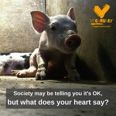 societybmay be telling you it's ok but what does your heard say?? Listen to your heart! GO VEGAN