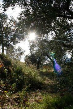 Los ribazos son las zonas más biodiversas