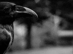 gif death blood the vampire diaries damon salvatore creepy horror dark dead murder insane mad satan darkness Demon satanic crow bloody psycho ritual insanity splatter madness psyco corvo satanic ritual demoniac corvus