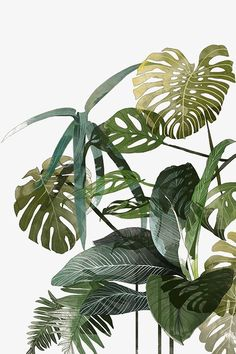 Beautiful art and illustrations of tropical palms and botanicals by Agata Wierzbicka. These would look stunning in a tropical themed bedroom or living room. Agata Wierzbicka, a Warsaw based illustrator who created images Art And Illustration, Pattern Illustration, Art Illustrations, Creative Illustration, Fashion Illustrations, Impressions Botaniques, Illustration Botanique, Tropical Leaves, Art Design