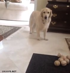 Funny dog gif!- he's like gonna catch it WAIT play it off like you weren't play it off like you weren't..