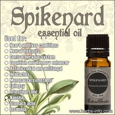 Uses And Benefits Of Spikenard Essential Oil (Full Guide) herbs-info. Essential Oil Safety, Essential Oil Uses, Essential Oil Diffuser, Edens Garden Oils, Spikenard Essential Oil, Oil Benefits, Carrier Oils, Diffuser Blends, Herbal Remedies