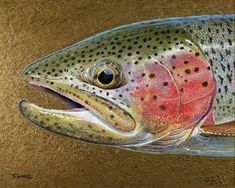 wild rainbow trout fish art
