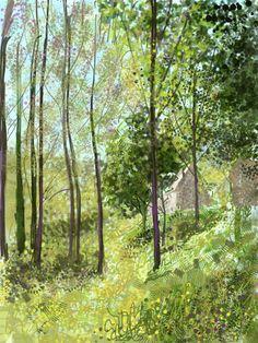 ipad drawing  Abbotsbury Gardens.  Rosie Britton