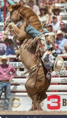 I shall Smash you for your spears that jab me! You shall cry. Cowboy Horse, Cowboy Up, Cowboy And Cowgirl, Cowgirl Style, Rodeo Cowboys, Real Cowboys, Cowboy Photography, Rodeo Rider, Bareback Riding