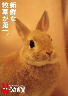"""""""kokirikoo:  新鮮な牧草が第一・・・・うさぎ党。  """""""
