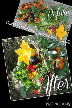 Garden Harvest...September 7, 2015 www.gardenanywherebox.com