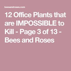 These office plants are hard to kill and SO easy to grow! When it comes to office plants, you have to grow these! How To Kill Bees, Office Plants, Things To Come, Roses, Arbors, Flower, Trellis, Planting, Climbing