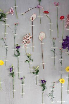 Een bloemen muur binnen met anthurium bloemen! Super origineel en mooi. In dit blog 6 manieren om bloemen aan de muur op te hangen!   reageerbuisjes bloemen muur - bloemen muur woonkamer - bloemen muur binnen - echte bloemen muur - decoratie - anthurium bloemen Party Entertainment, Entertaining, Flowers, Plants, Blog, Diy, Cover, Wall, Ideas