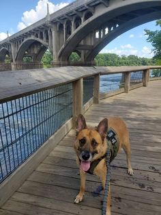 Cayce and West Columbia, SC Vacation Spots, Vacation Ideas, West Columbia, Dog Friends, Dogs, Animals, Outdoor, Outdoors, Vacation Places