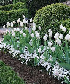 Look what I found on #zulily! White Flower Bulb Garden - Set of 25 #zulilyfinds