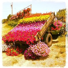 summer 2012.  this is a local plant farm whose owner uses this roadside truck bed to display seasonal arrangements.  could this display   have nailed the warm, fragrant, colorful feeling of summer any better?  no.  :)