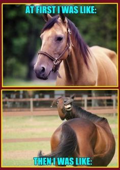 funny horse memes - Google Search                                                                                                                                                                                 More
