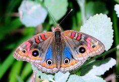 Butterflies and Moths 3