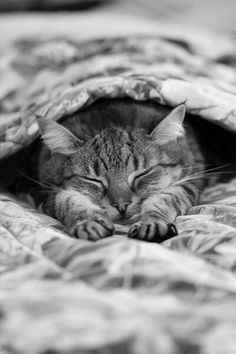 naptime in black and white
