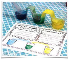 First Grade Blue Skies: Close Read Primary Science, Stem Science, Kindergarten Science, Elementary Science, Science Classroom, Science Education, Teaching Science, Teaching Ideas, Classroom Ideas