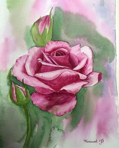 #watercolorroses hashtag on Instagram ... from krubird_watercolor ... Watercolor Rose, Watercolor Paintings, Paper Crafts, Plants, Blog, Instagram, Watercolour Paintings, Paper Craft Work, Watercolor Drawing